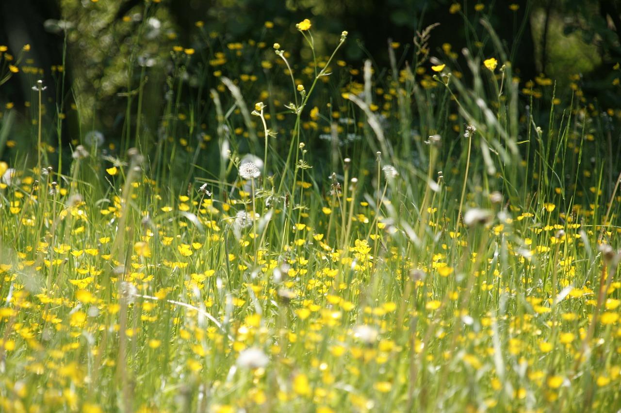 Objawy alergii na pyłki